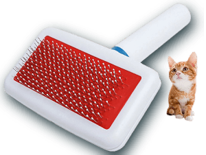 brosse carde pour chat