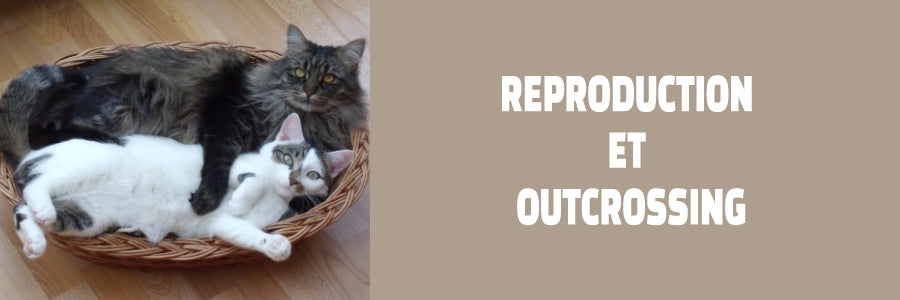 reproduction et outcrossing