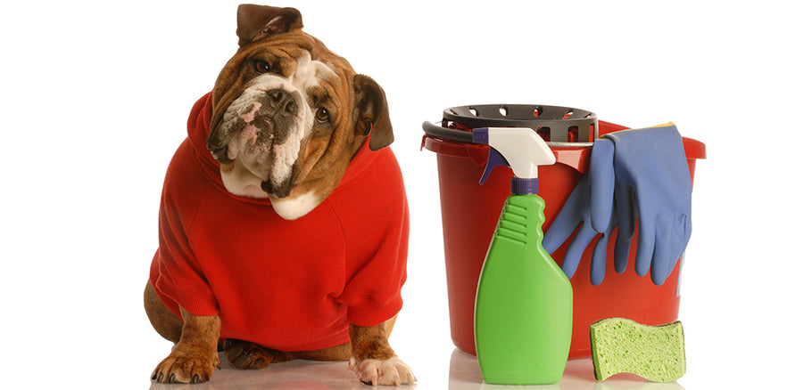 How To Store Cleaning Supplies Safely Away From Your Pets