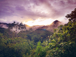 Experience the deliciousness of a lush healthy rainforest (picture)