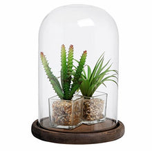 Load image into Gallery viewer, PROFESSIONAL DISPLAY CASE:  Dome Glass Cloche Bell Jar Display Case with Rustic Wood Base/Tabletop Centerpiece Dome, 10 X 7 Inches - Area 399 Hachune Rage