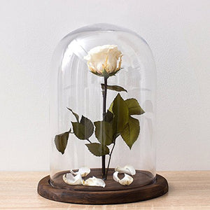 PROFESSIONAL DISPLAY CASE:  Dome Glass Cloche Bell Jar Display Case with Rustic Wood Base/Tabletop Centerpiece Dome, 10 X 7 Inches - Area 399 Hachune Rage