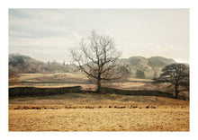 Load image into Gallery viewer, Tree Of Life, Elterwater, Lake District (Limited Edition)