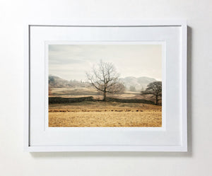Tree Of Life, Elterwater, Lake District (Limited Edition)