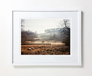 Elterwater Valley with Sheep, Lake District (Limited Edition)