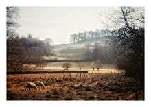 Load image into Gallery viewer, Elterwater Valley with Sheep, Lake District (Limited Edition)