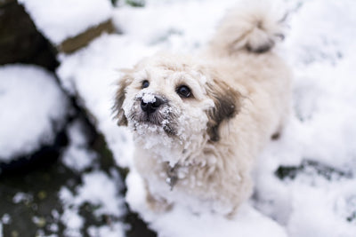 Preparing Your Dog for the Cold Months Ahead