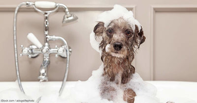 Helping Your Dog Conquer the Fear of Bath Time