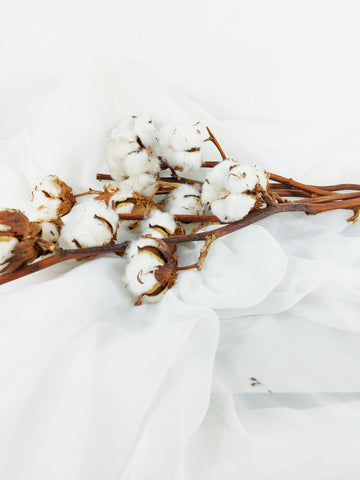Cotton Long Stem