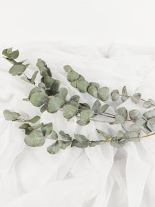 Dried Eucalyptus