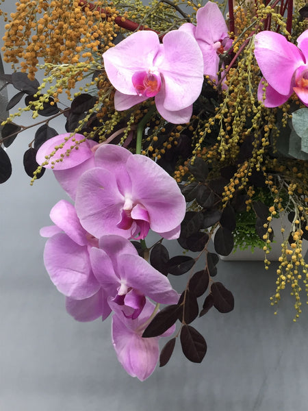Phalaenopsis Arrangement - K. FLOWER