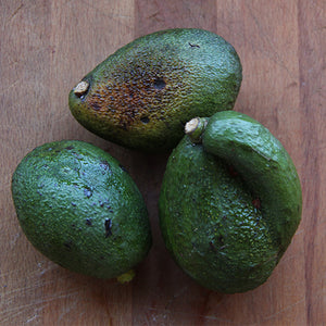 Avocado, Seconds Grade 1kg