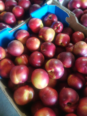 Nectarines, Seconds - 2kg