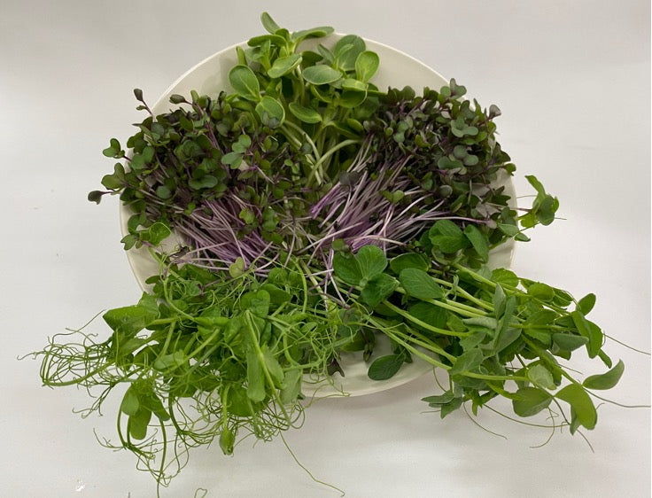 Microgreens - High Protein Mix 100g