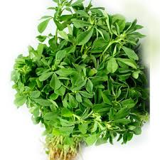 Fenugreek - Bunch