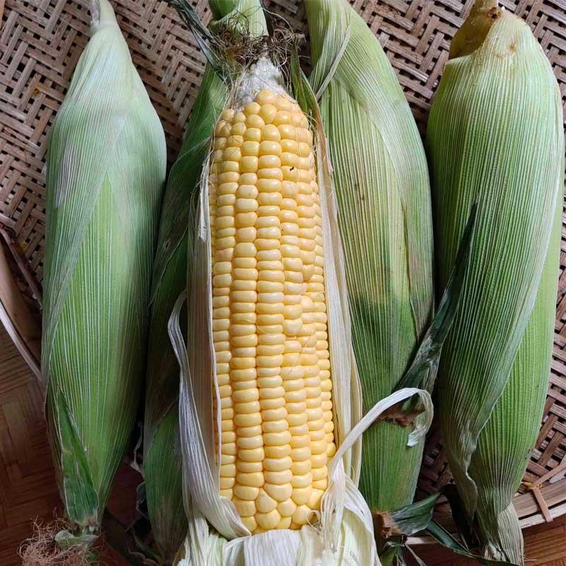Load image into Gallery viewer, Sweet Corn