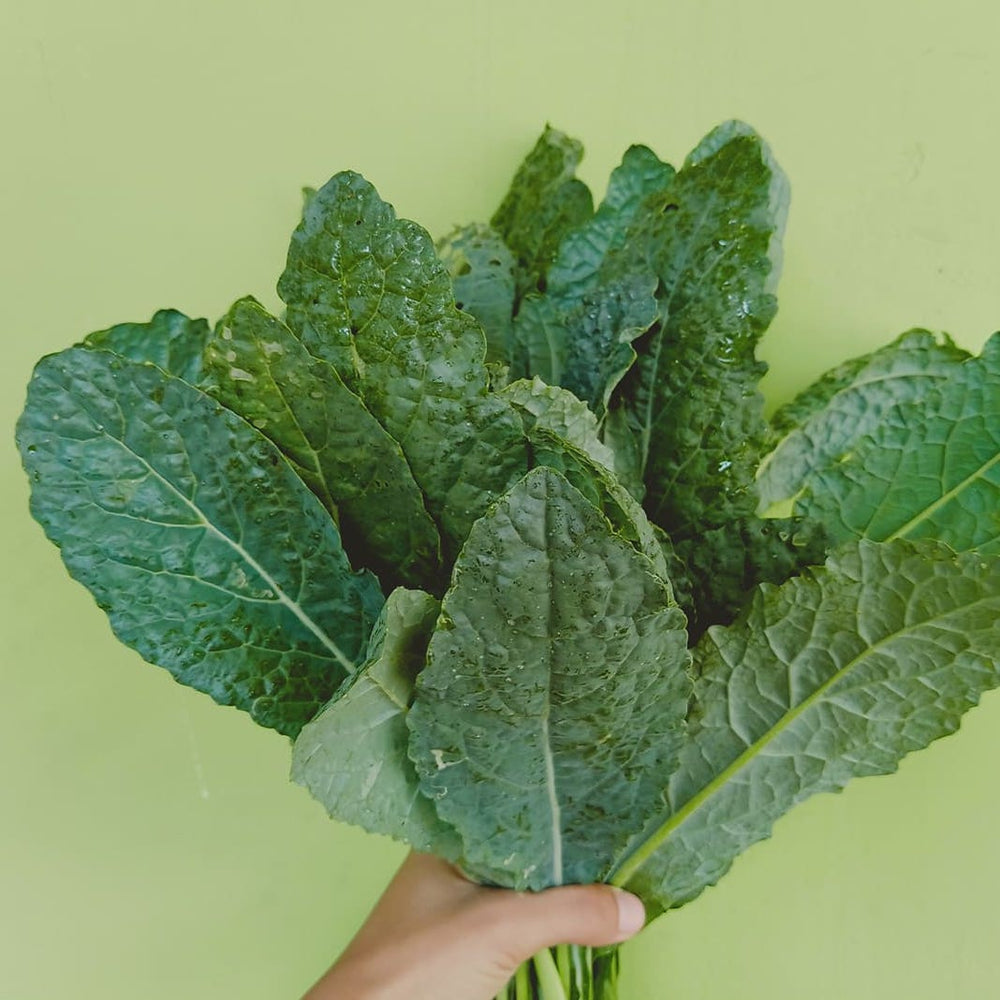 Load image into Gallery viewer, Dinosaur Kale