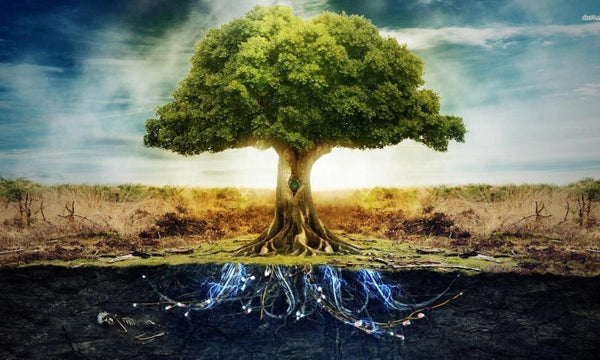 The tree of life is an ancient symbol of wisdom and harmony