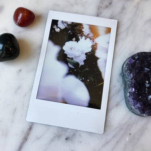 White Rose - Instax Mini Print
