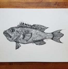 PRINT BLACK SEA BASS