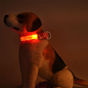 Max and Maci's Store Dog Collar Anti-Lost Camouflage Led Light Dog Collar
