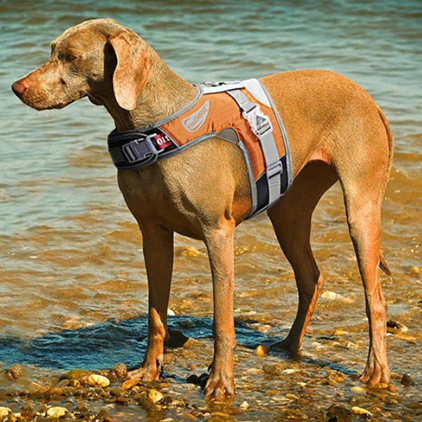 Dog Harness Adjustable  Led Collar Vest - Max and Maci's Store