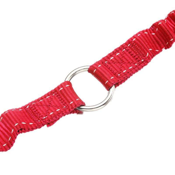 Double Dog Leash Elastic Bungee - Max and Maci's Store