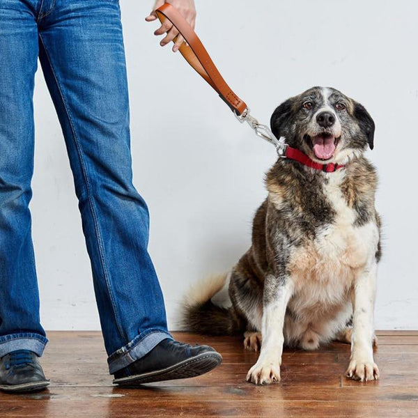 Leather Durable Dog Traffic Lead Leash - Max and Maci's Store