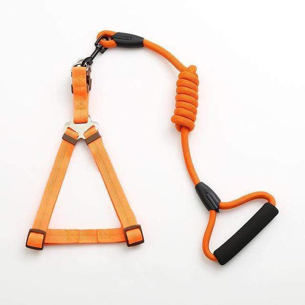 Max and Maci's Store Dog Collar orange / L pet dog leash Traction Rope