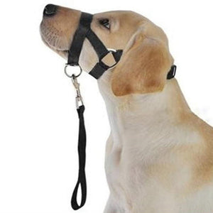 Max and Maci's Store Dog Collar Pet Dog Anti Bark Bite Head Leash