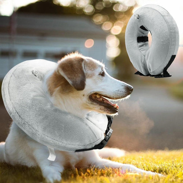 Protection Medical Cone Collar - Max and Maci's Store