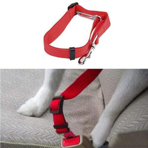 Max and Maci's Store Dog Collar Red / M Dog Collar New Vehicle Car Seat Belt