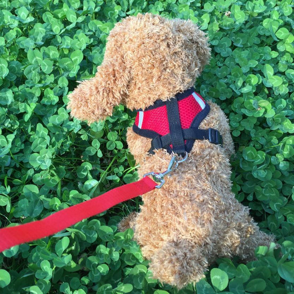 Running Dog Leash Puppy  Harness - Max and Maci's Store