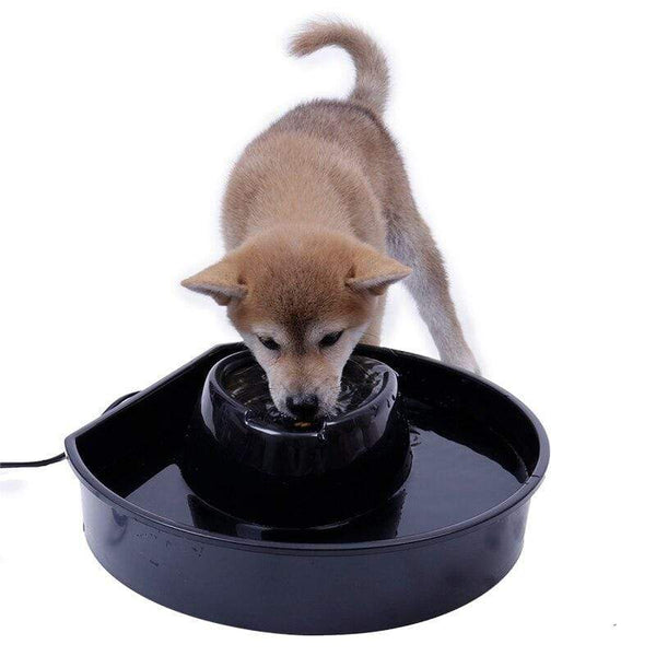 Automatic Pet Feeder For Cats And Dogs - Max and Maci's Store