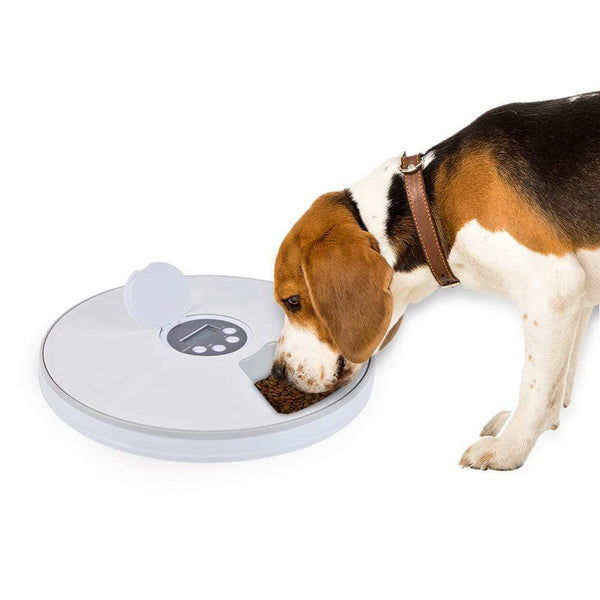 New Automatic Timing Pet Feeder - Max and Maci's Store