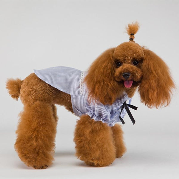 Dogs Bowtie Cute Fashion Clothes - Max and Maci's Store