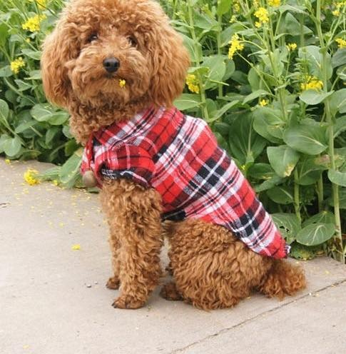 Fashion Puppy Dog Vests Plaid Stripe Pet T Shirt - Max and Maci's Store