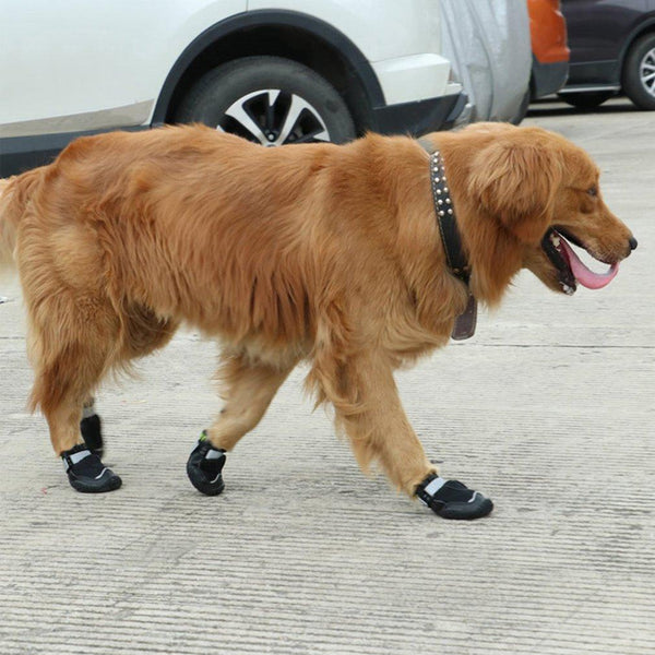 Dog Breathable Warm Comfortable Shoes - Max and Maci's Store
