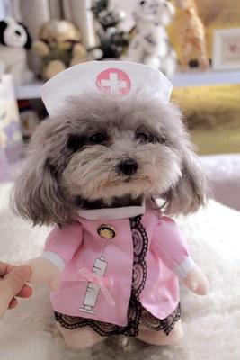 Max and Maci's Store Pet supplies Nurse / S Funny Dog Costumes