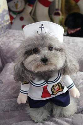 Max and Maci's Store Pet supplies Sailor / S Funny Dog Costumes
