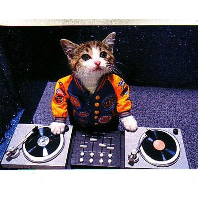 DJ Kitty Postcard