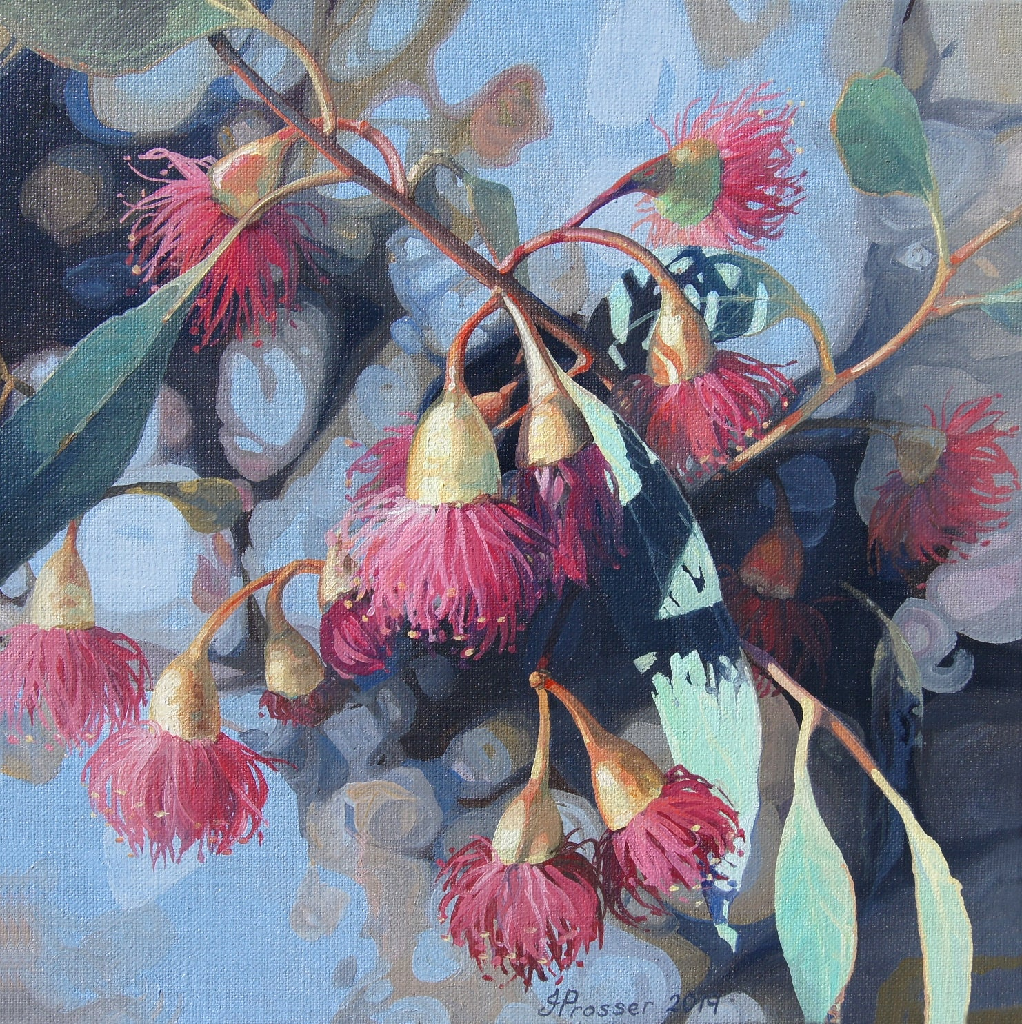 Red Gum Flowers - Limited Edition Print