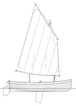 11 6 Guillemot profile