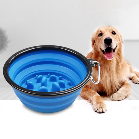Golden Retriever and Blue Travel Bowl