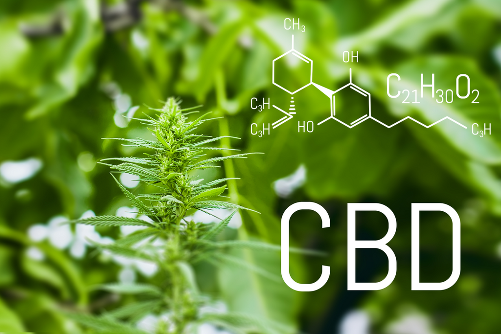Is CBD Skincare The Real Deal? Here's What Science Shows