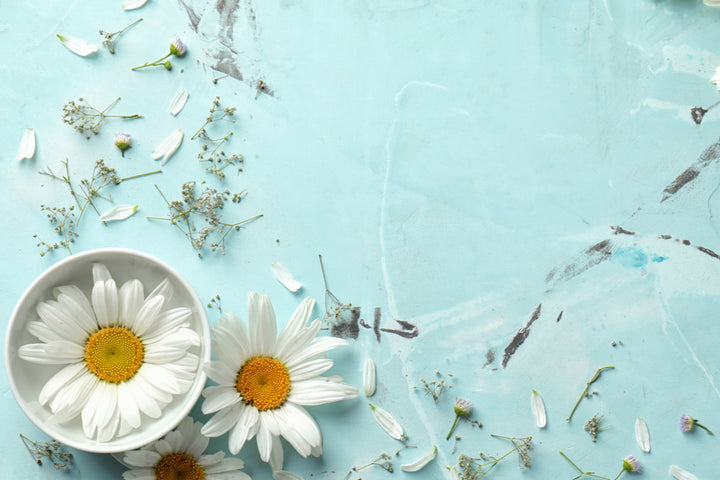 How Chamomile Flower Extract Soothes the Skin