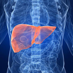 Detox Liver Pathways (DET)