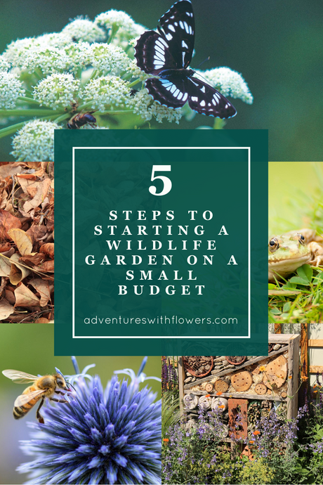 5 ways to start a wildlife garden on a small budget