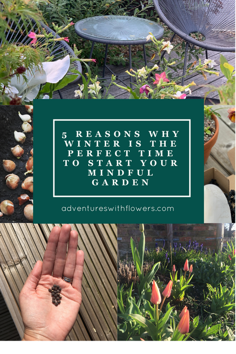 5 reasons why winter is the perfect time to start your mindful garden