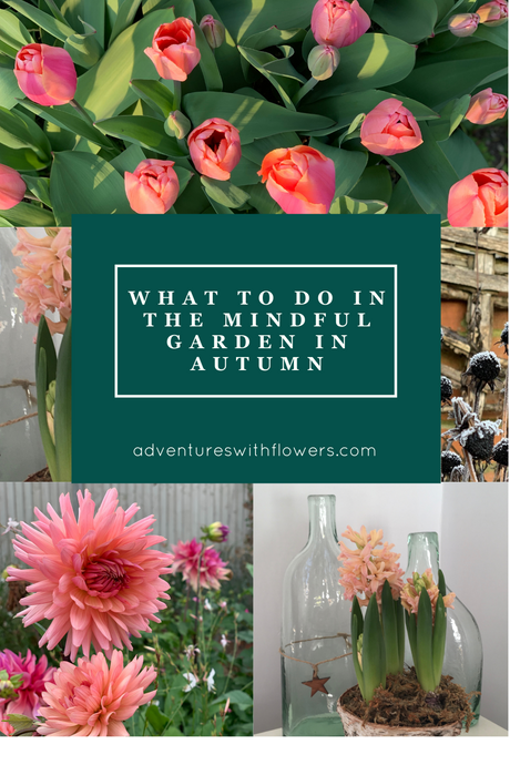 What to do in the mindful garden in Autumn